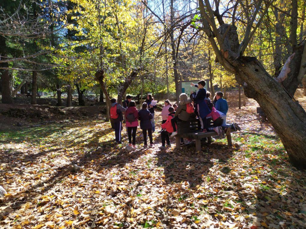 fauna y flora en arboreto alfaguara_tren del patrimonio