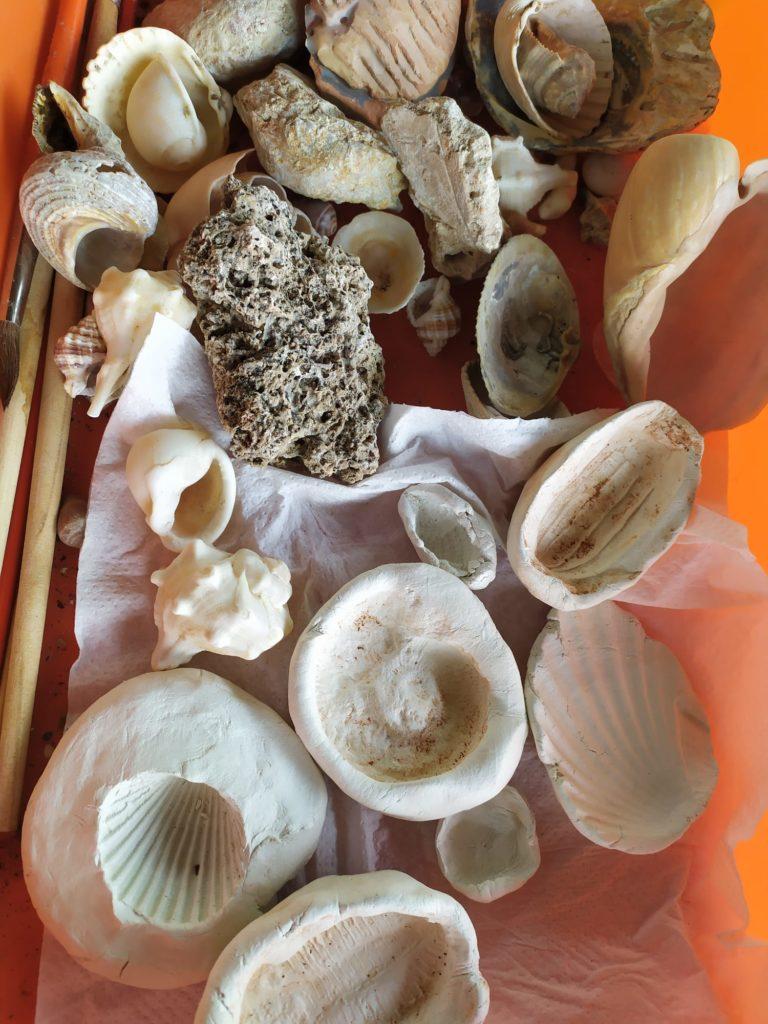 taller fosiles alfaguara_tren del patrimonio