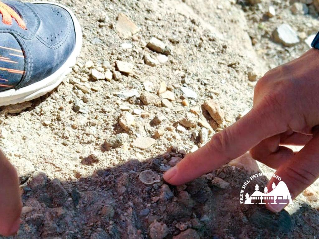 TrendelPatrimonio_Taller de fósiles 07